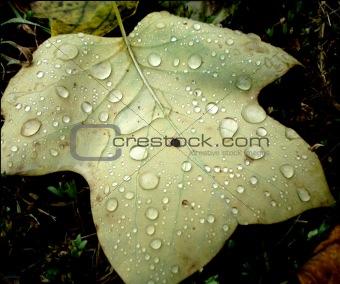 An August rain