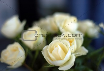 white roses