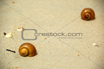 Beach and snails