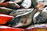 Parrotfish in the market