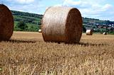 Yellow grain harvested on a farm field