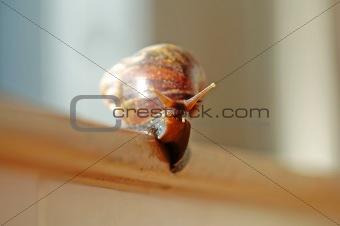 A slithered snail