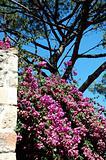flowers on a castle in lisboa