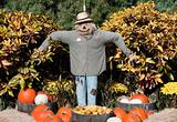 Halloween Scarecrow
