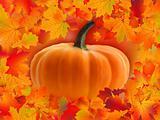 Pumpkin card with copyscace
