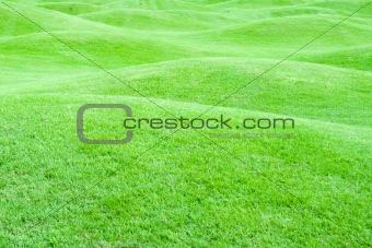 Green pastures 1