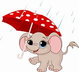 Cute baby elephant under umbrella