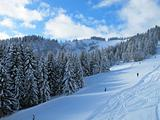 Snow covered ski piste surrounded by trees on sunny day