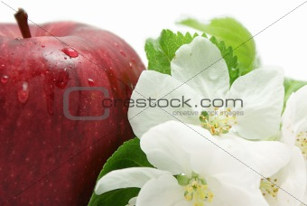 Apple and flower