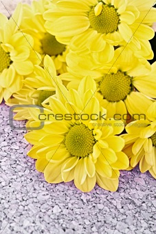 Chamomile on wooden surface