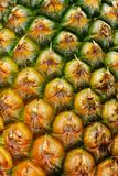 pineapple pine