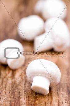 fresh champignon