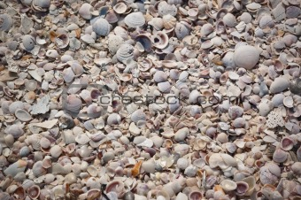 Beach made of Sea Shells
