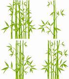 Bamboo, vector (mesh)
