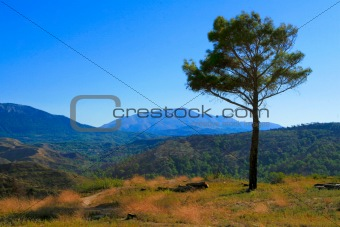 Tree and mountain landscape. Rhodes. Greece