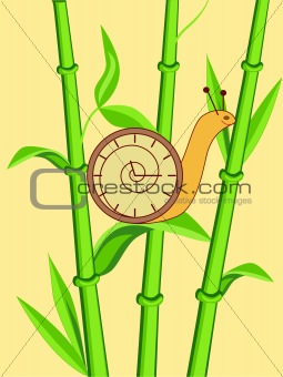 clock snail on bamboo