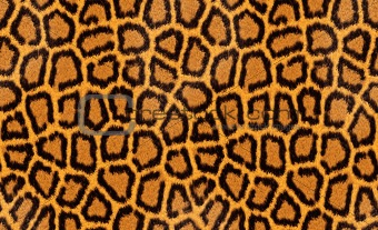 abstract texture of leopard fur