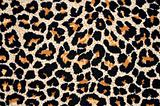 abstract texture of leopard skin