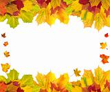 Beautiful autumn maple leaves with copy space for your text