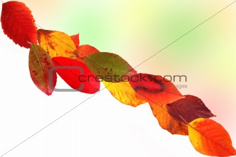 Autumn card of colored leaves