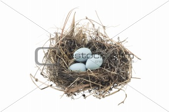 Group of blue eggs in bird nest isolated on white