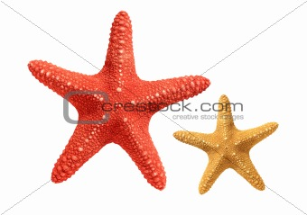 Bright seastars isolated on white background