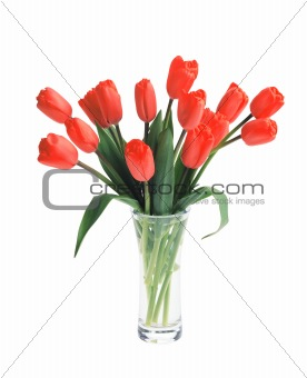 beautiful bouquet of red tulips in vase isolated on white backgr
