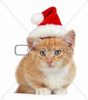 kitten with xmas hat