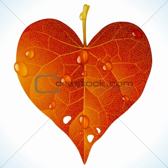 Autumnal love