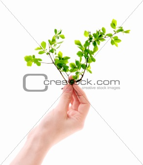 Green plant in hand isolated on white