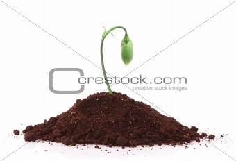 Young plant in ground over white background