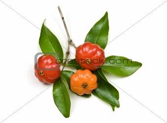 Brazilian Cherry – Pitanga