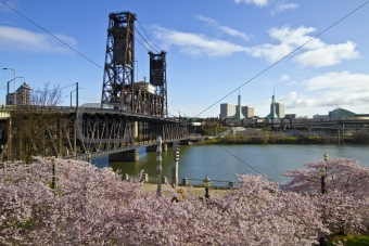 Cherry Blossom in Portland Oregon