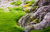 mossy carpet II