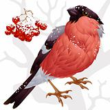 Vector bullfinch and ashberry 2