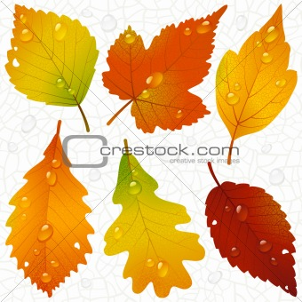 Vector autumn leaves and seamless vein background