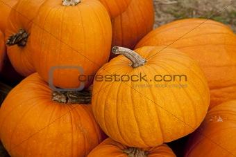 Autumn Halloween Pumpkins