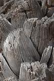Palm trunk texture