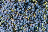 Grape high quality background