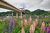 Lupine Flowers Under the Bridge