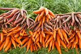 Organically Grown Carrots 2