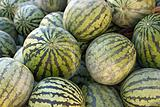 Seedless Water Melon