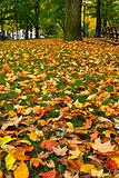 Fall Leaves on Lawn Grass in the Park