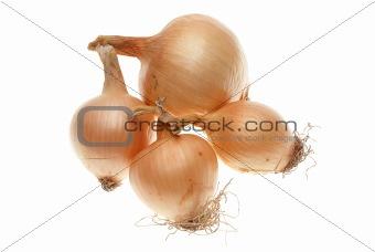 Four ripe onions