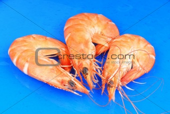 Three shrimps over blue