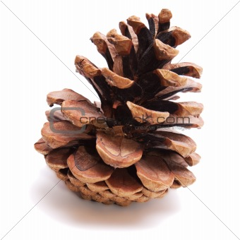 Old Dry Pinecone isolated 1