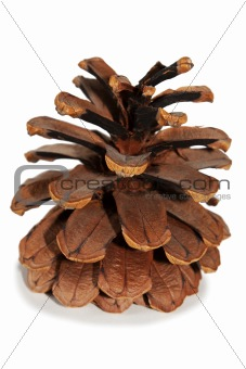 Old Dry Pinecone isolated 3
