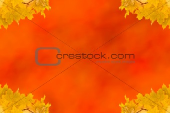 Autumn maple leaves empty frame with space for text