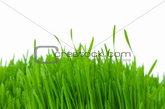 Green glass isolated on the white background