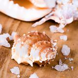 seashells and salt